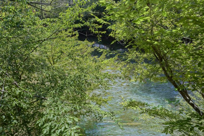 River View from 1 Bedroom Honeymoon cabin - River Rush